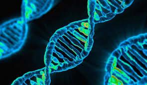 """Seminario di approfondimento tematico –  """"Progetti innovativi di selezione genetica in ambito apistico. Realtà italiane in essere: Beenomix"""""""