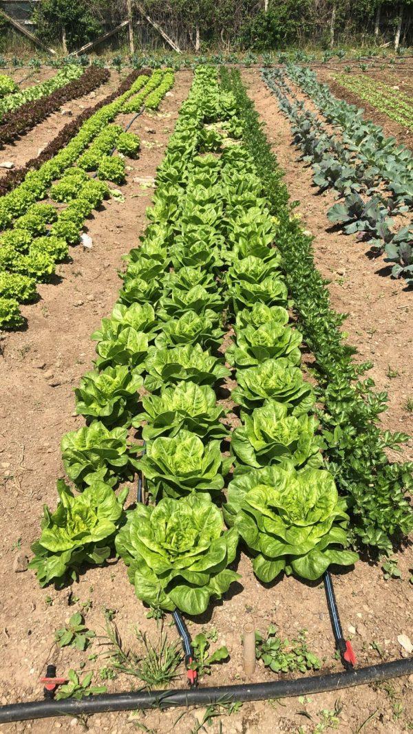 Canasta Verde Bio