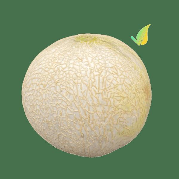 melone francesino esterno