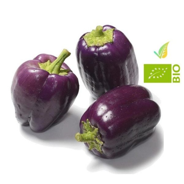 peperone viola biologico