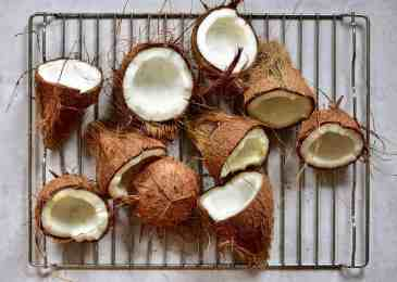 open coconuts, ready to make virgin coconut oil.