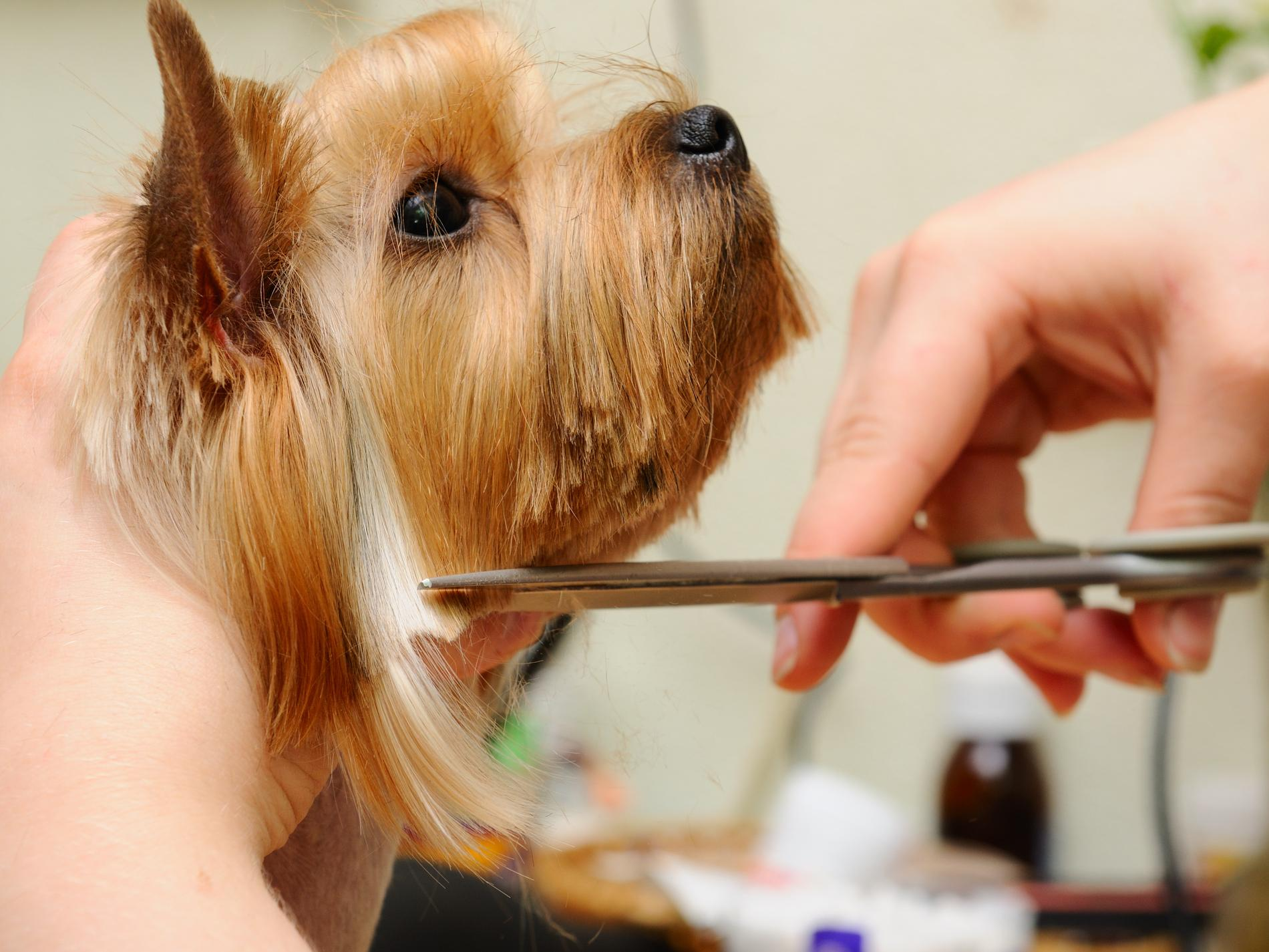 8 Benefits of Hire a Professional Pet Grooming