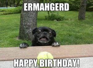 100 Happy Birthday Dog Memes