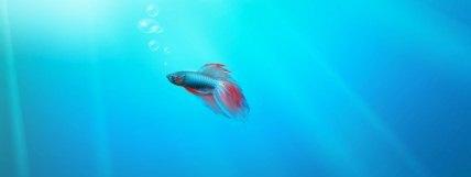 Windows 7 betta fish
