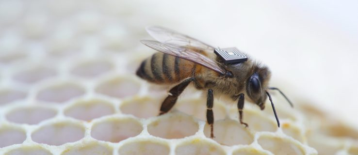 Animal migration tracking: how did we get to bee backpacks?