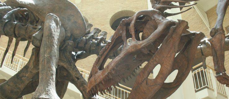 Titanosaur: The technology behind paleontology