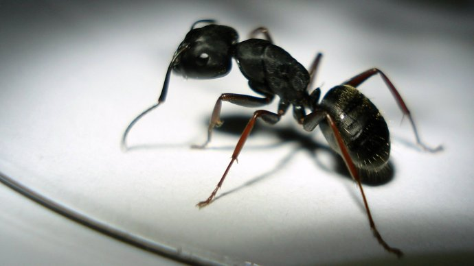 ants_lazy_efficient