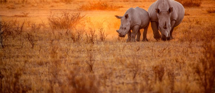 The clever tech keeping South African rhinos alive