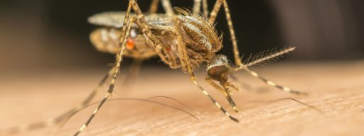 twitter_bans_man_for_mosquito_death_threat