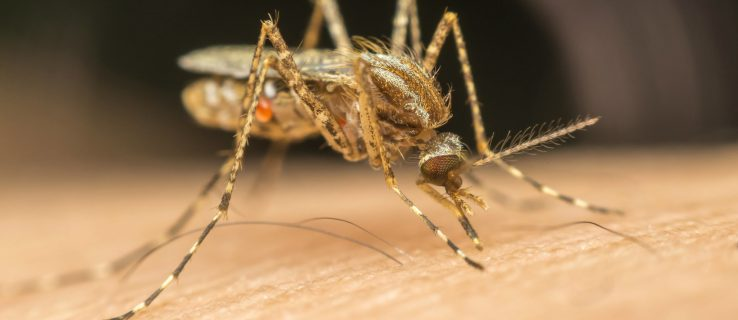 Twitter bans man for mosquito death threat
