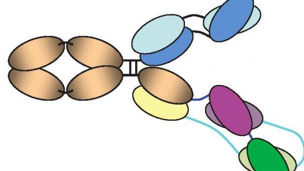 150864_new_antibody_attacks_hiv_strains