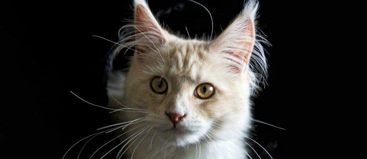 Cat Urine Parasite