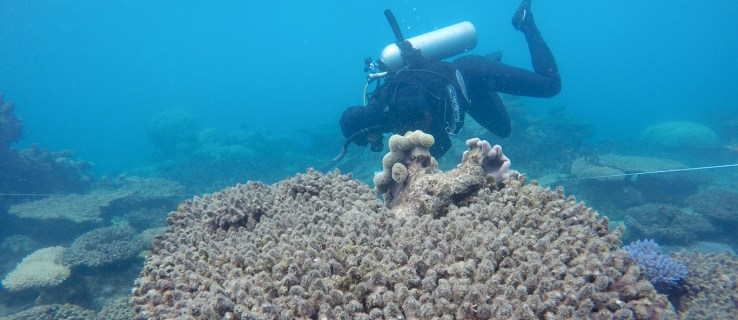 Catastrophic coral bleaching is killing the world's reefs (and that's bad news for humanity)