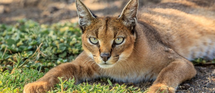 """""""Dark Caracal"""" operation blamed for the hacking of thousands of victims in 21 countries"""