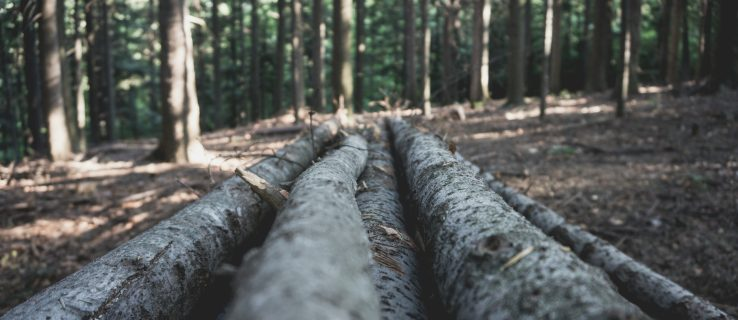 Scientists have just made wood that is as strong as steel