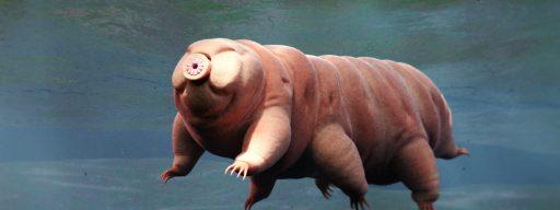 tardigrade_discovery_1