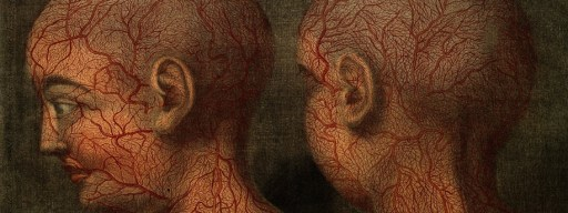 superficial_blood_vessels_of_the_head_and_neck
