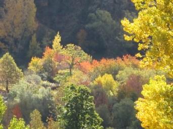 when-to-come_autumn3