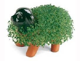 Chia Pet finished