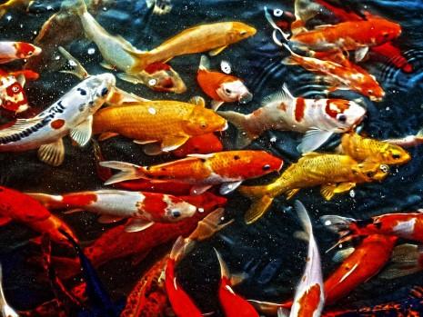 تفسير حلم رؤية حوض أسماك حوض الزينة الملونة في المنام