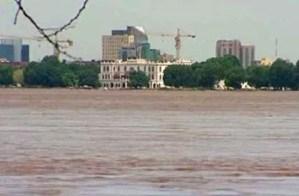 بيئيون: قطع غابات السنط ينذر بغرق الشريط النيلي