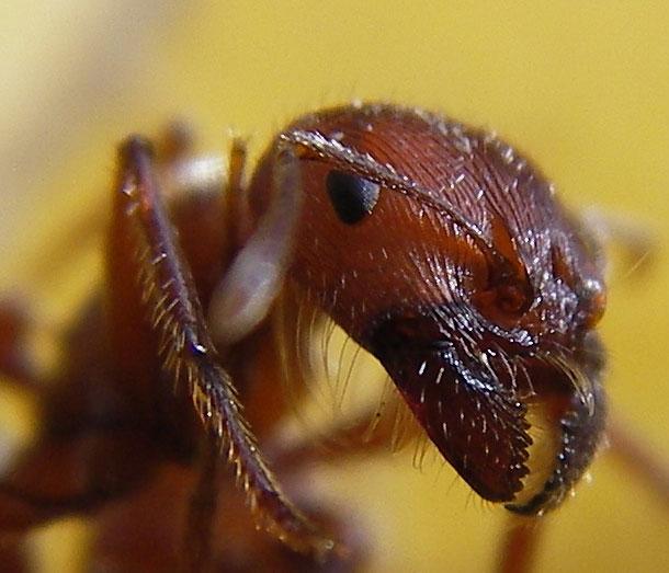 16. Formigas - Imgur