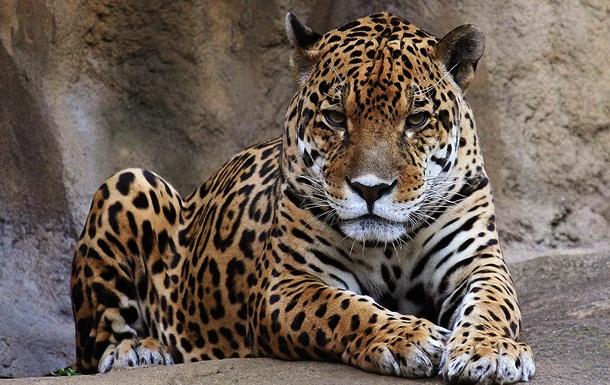 19. Leopardo - Imgur