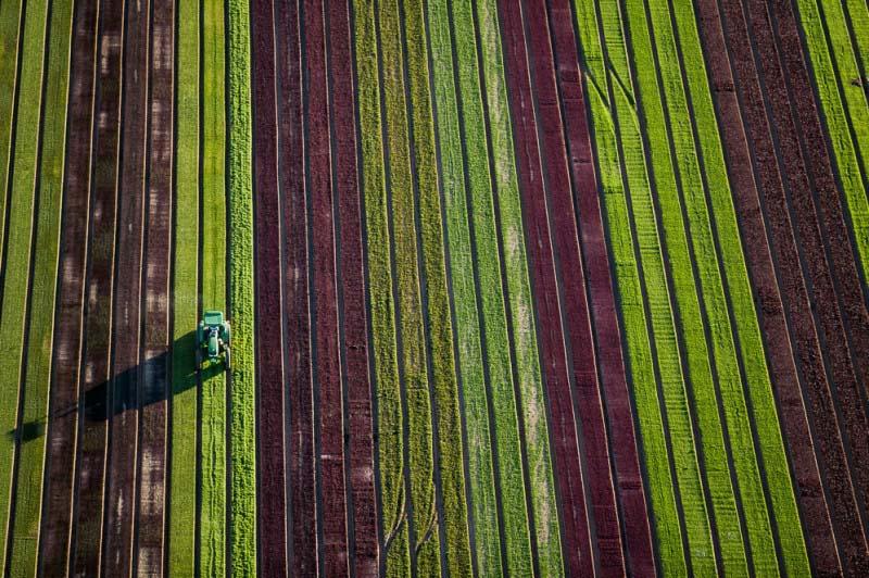 14. Agricultura em Arizona (EUA).