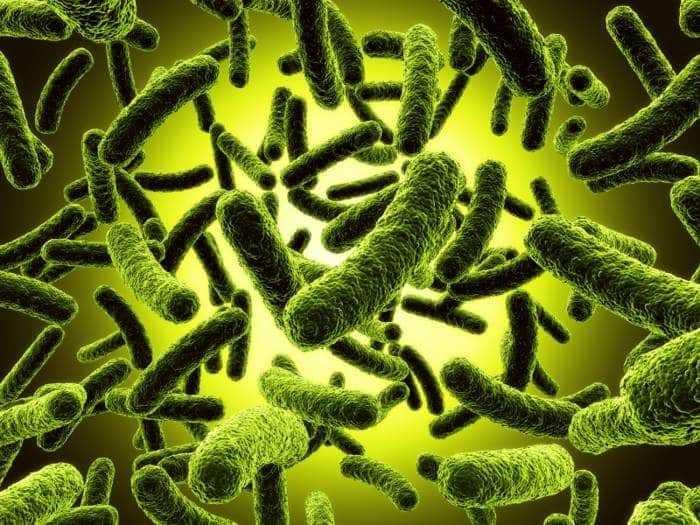 هل التعرض للميكروبات والعدوى يختلف إذا ما حدث نهارا عنه ليلا ؟!