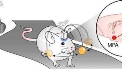 يتمكنون من السيطرة على أدمغة الفئران