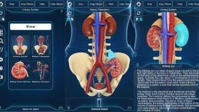 التركيب التشريحي للجهاز البولي My Urinary System