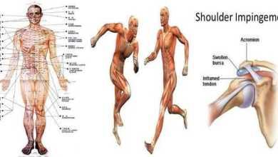 علم الحركة في الإنسان Kinesiology