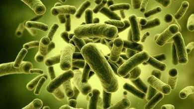 """دراسة: قلة عدد البكتيريا المهبلية """"الصديقة"""" قد يرتبط بسرطان المبيض"""