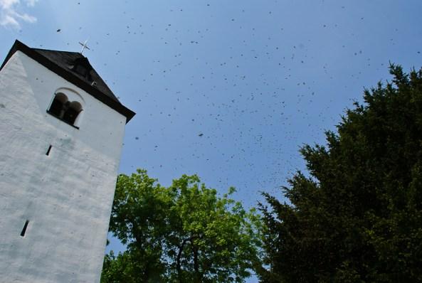 Bienenschwarm am Alten Ranzeler Turm