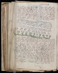 Page from the Voynich Manuscript illustrating strange creatures