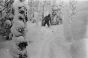 Photograph of Menk (yeti or almas) reported taken by a Dylatov Pass team member