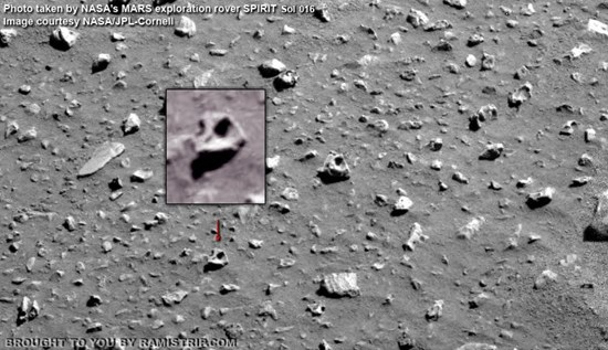 Bird skull found on Mars