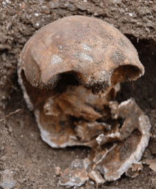 The skull of Julia Martha Thomas after lying hidden for 130 years