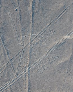 Nazca Lines - The dog