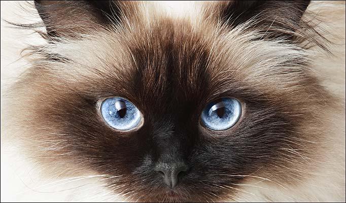 Chinese 'Cat' Boy has Glow in the Dark Eyes