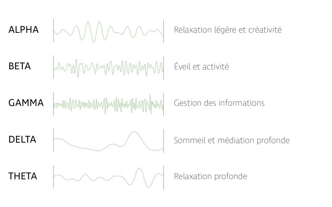 Alpha, Bêta, Delta … Quelles sont ces ondes cérébrales qui nous « gouvernent »