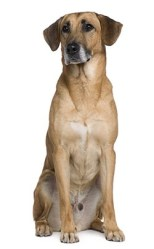 The Hidden Dangers of NSAIDS (Rimadyl) for Your Dog 2