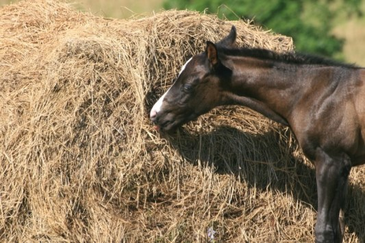 The Best Hay for Horses 2