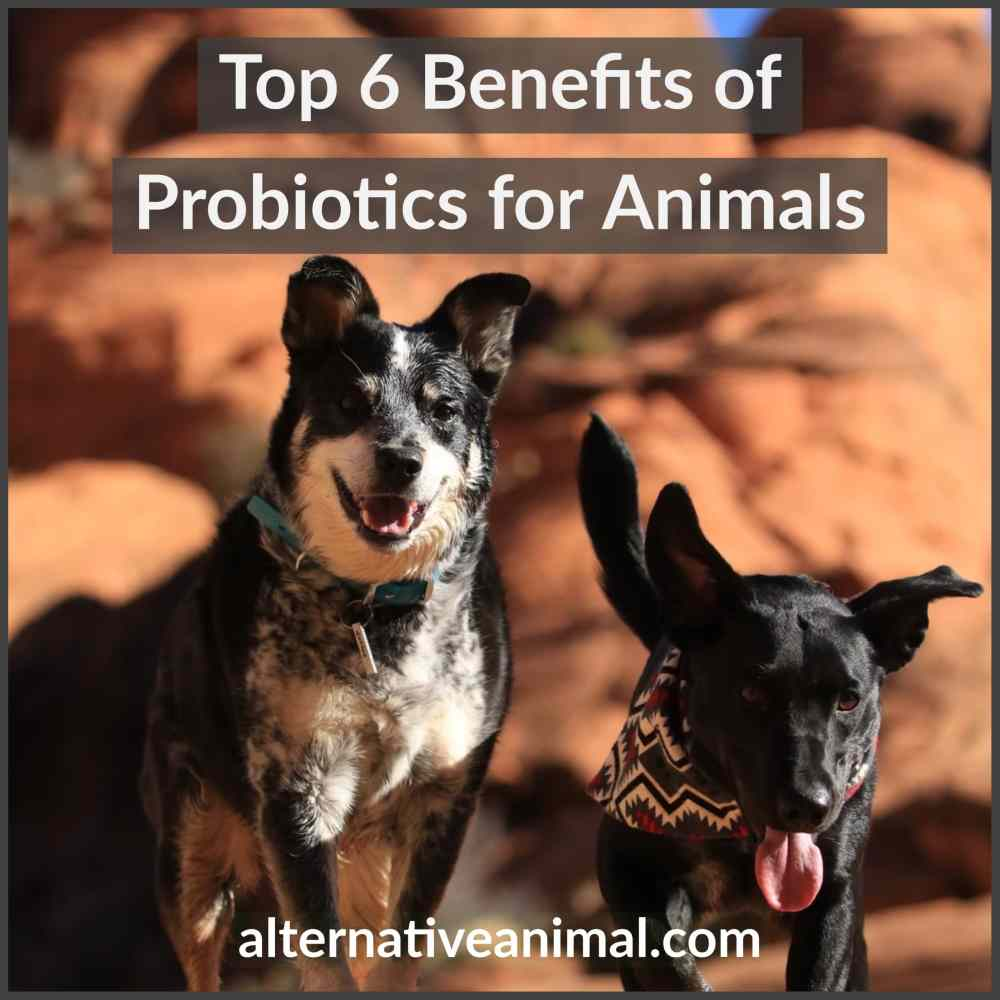benefits of probiotics for animals