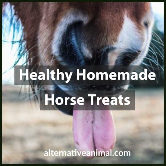 Healthy Homemade Horse treats