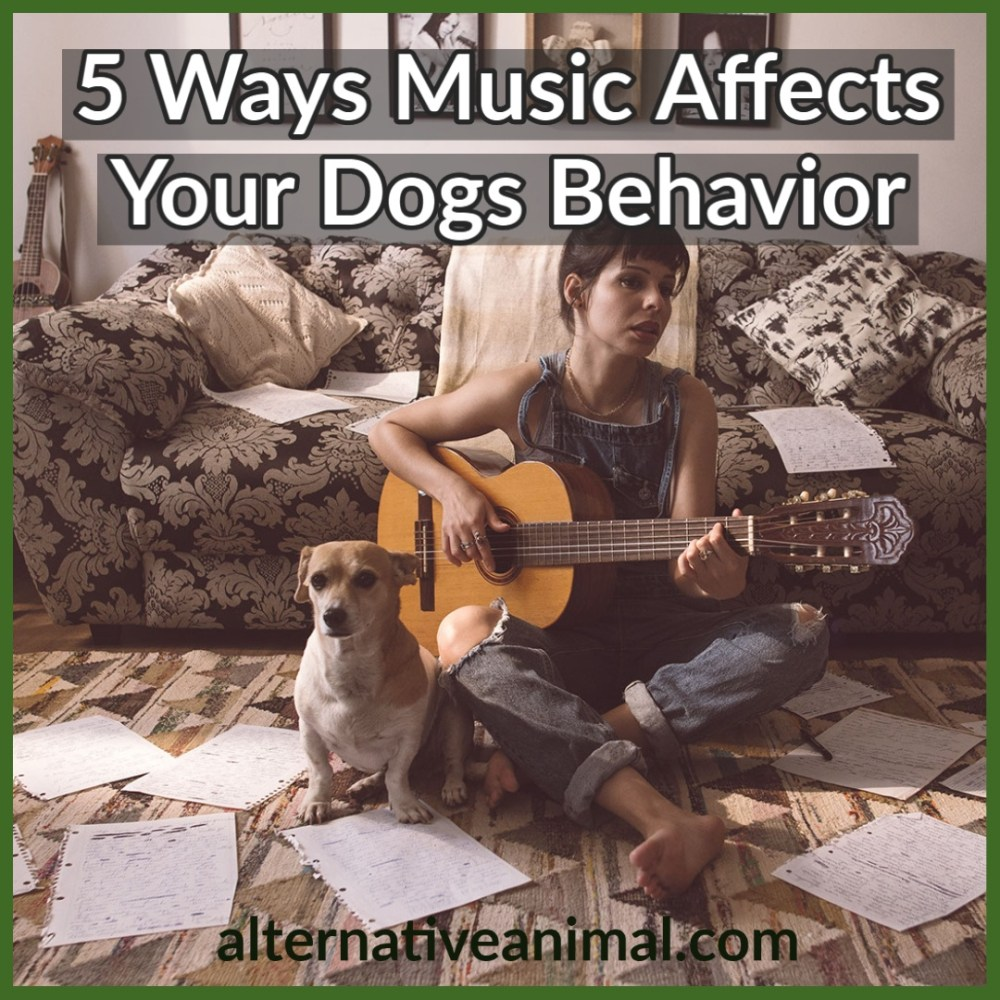 How music affects your dog