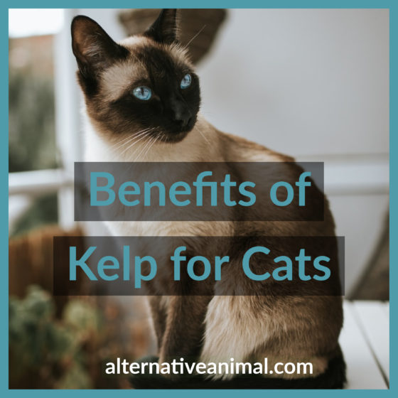 benefits of kelp for cats