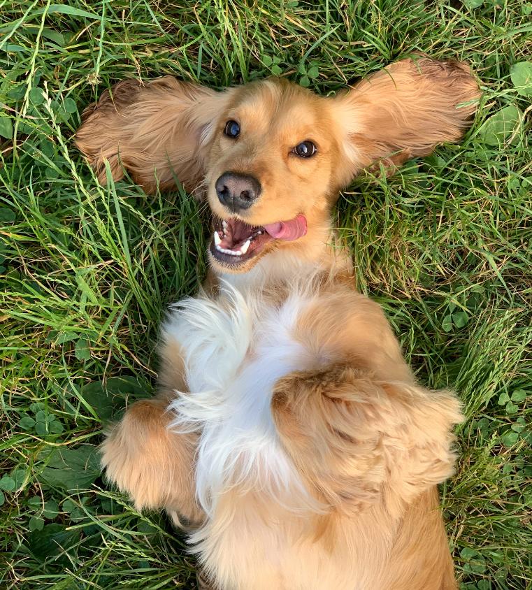 Liver Detox for Dogs