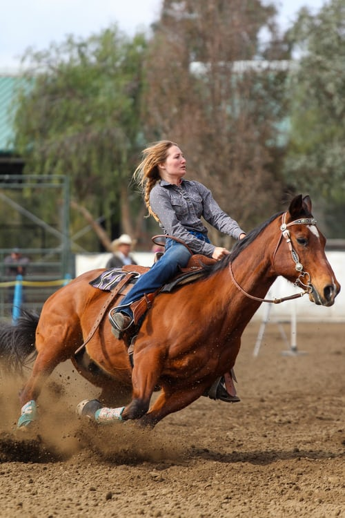 Adrenal Support for Horses