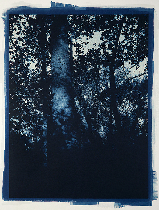 Twilight Trees 1:2.5 gum solution, no bleach etch, treated like a single pass print, Arches Platine, 12x16 inches